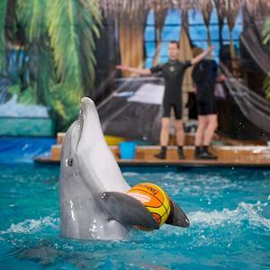 Дельфинарии, океанариумы Апрелевки