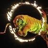 Цирки в Апрелевке