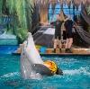 Дельфинарии, океанариумы в Апрелевке