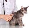 Ветеринарные клиники в Апрелевке